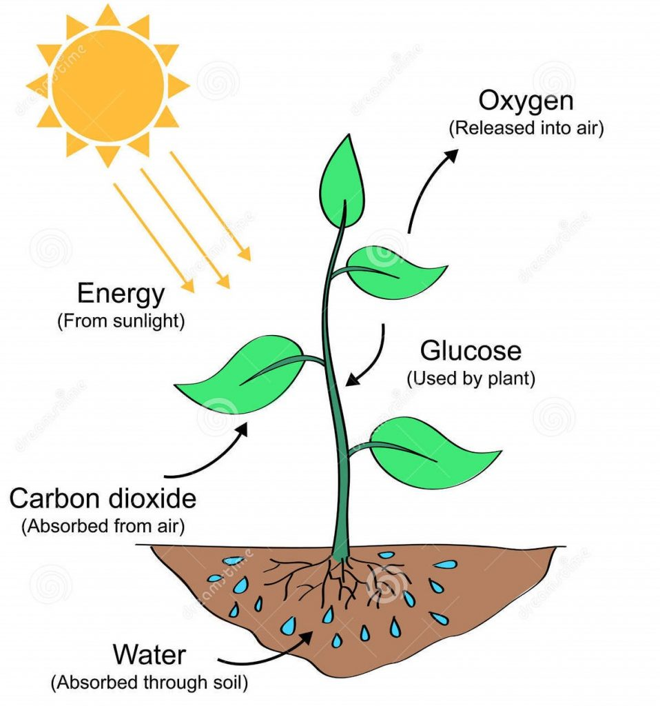 deforestation carbon cycle