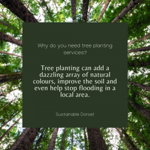 Tree Planting Services 2