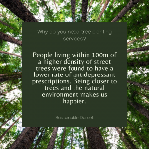 Tree Planting Services 4