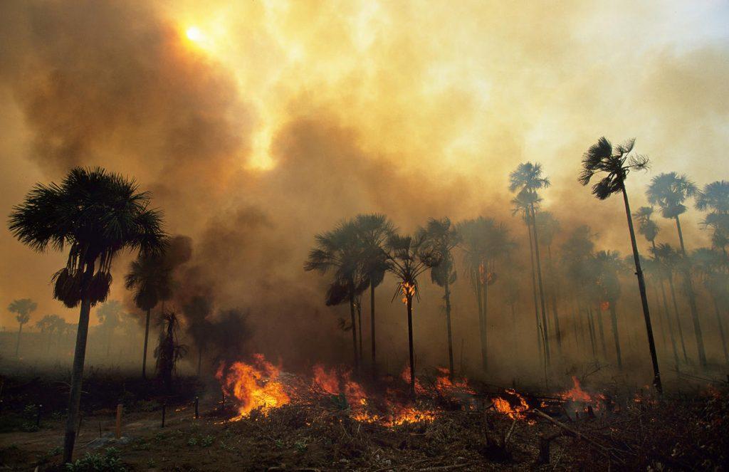 Fire and smoke in Amazon
